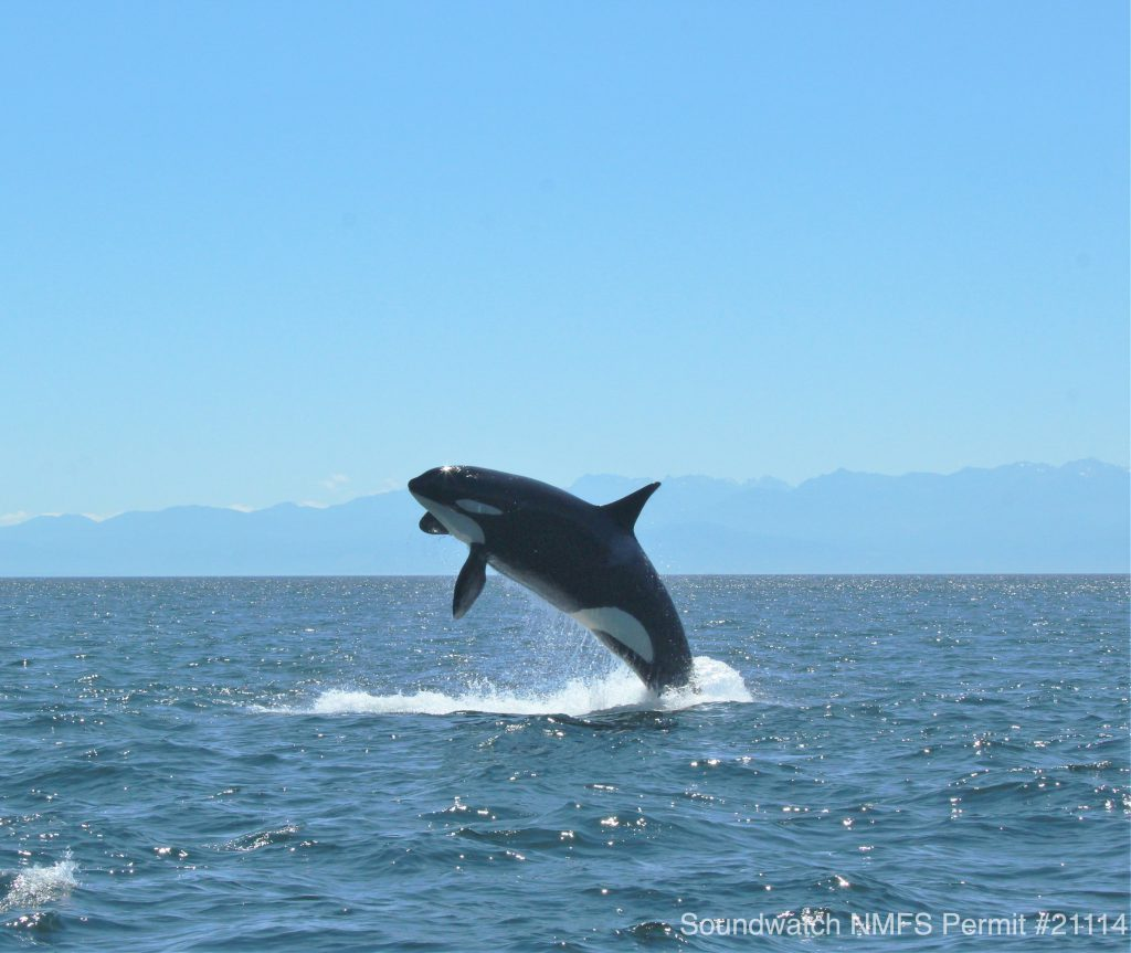 Canadian Management Measures to Protect Southern Resident Killer Whale