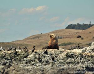 Seal & friends sun bathing