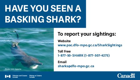 Have You Seen A Basking Shark graphic